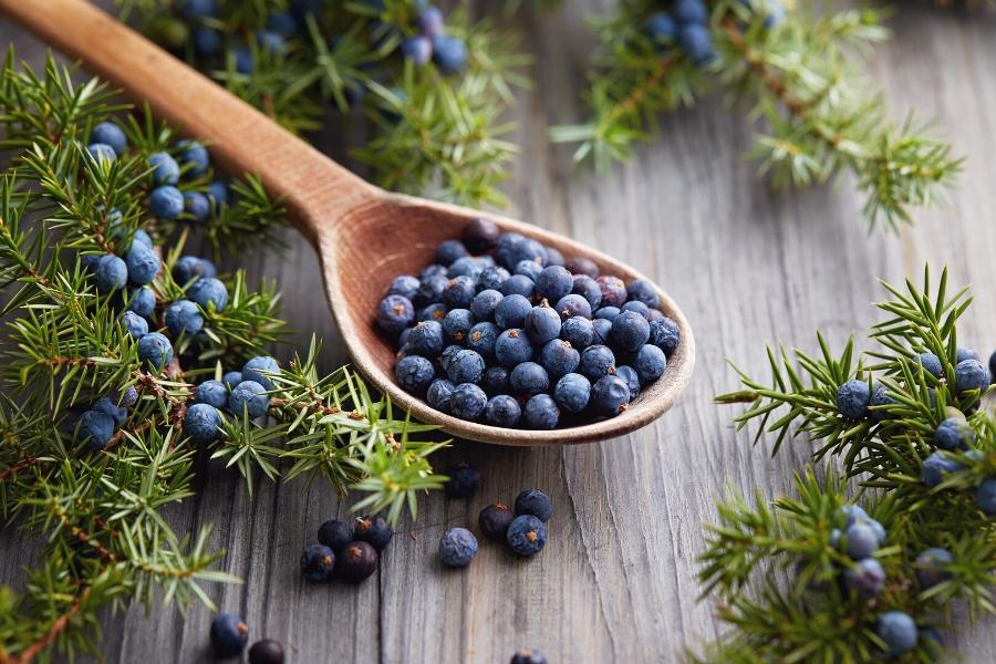 Juniper berries on a wooden spoon